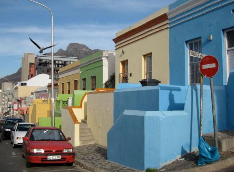 Bo Kaap Seagull by thrice-cursed