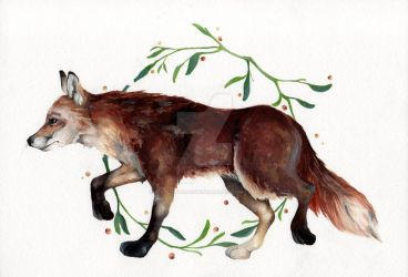 Red fox (Vulpes vulpes) by getalittlelostwithme