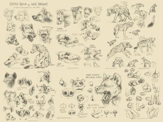 Spotted Hyena Studies / Tutorial by kenket