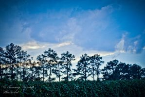 vines trees clouds by Tommy8250