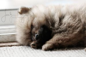 afternoon nap. by indie-click