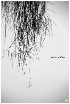 :: ...about others :: by am-azham
