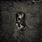 Kittens in the hole by AnnetVoronaya
