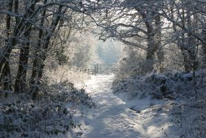 Cold Path by GFI-Ryper