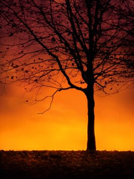 Tree Silhouette at Sunset by jenny4