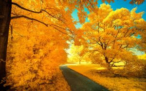Yellow Trees Part VII by myINQI