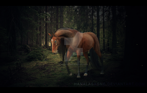 lost in the dark forest by HanaLasagne