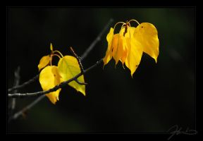 Reconing Fall II by tisbone