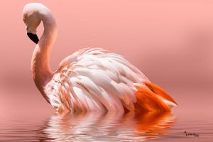 Flamingo-2010 by gemlenz