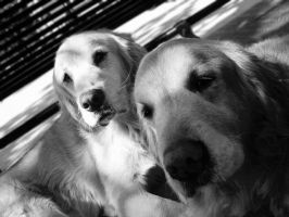 dogs by cirquealegria