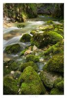 Mossy by AndreasResch