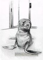 Lonely Seal Pup by ValkyrieNZ