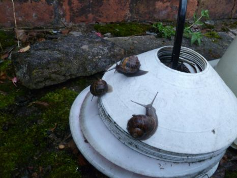 Garden Snails on Football Cones 2 by Captain-Art-hero
