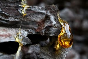 One More Drop of Amber by AdMalamCrucem