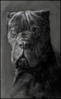 Cane Corso by LindseyWArt