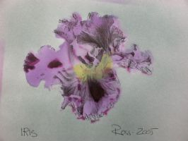 Purple Iris by rosswright