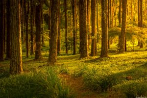 Enchanted Forest 9 by AkaSling