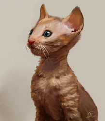 Cornish Rex Kitten by Illumikage