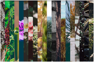 Nexus 5 wallpapers pack by Clubberry