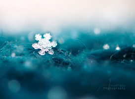 Little Snowflake. by Annarigby