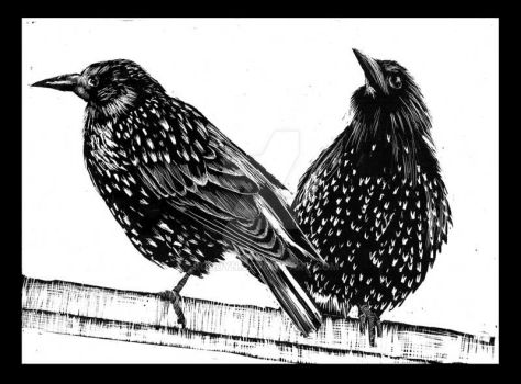 Two Starlings by RoodyN