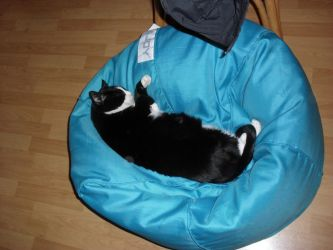 Spooky snoozing on the bean-bag. by HHog