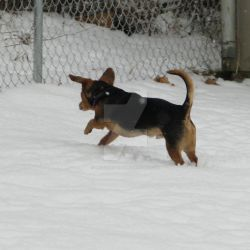 Joey Playing in Snow by unseeliefaery
