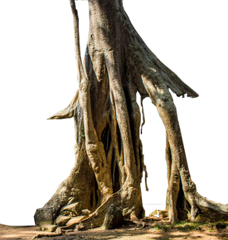 arbre temple Angkor(png) by boodlemoo