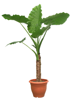 PLANT png by DIGITALWIDERESOURCE