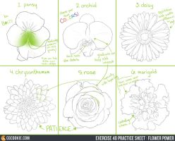 Exercise 40 Practice Sheet: Flower Power by CGCookie