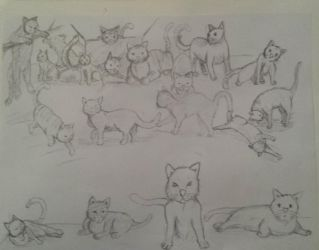 Bored at work: Cat Edition by jornas