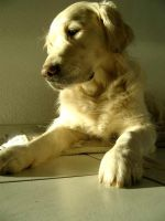 my dog in the sun 2 by Ailime-Ael