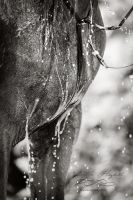 Dripping by Colourize