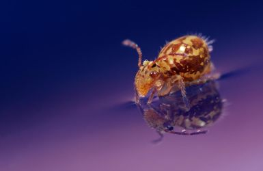 Springtail Reflection 6 by Alliec