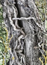 Twisted Trunk by extremecapture