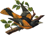 Victorian bird 13_quaddles by quaddles