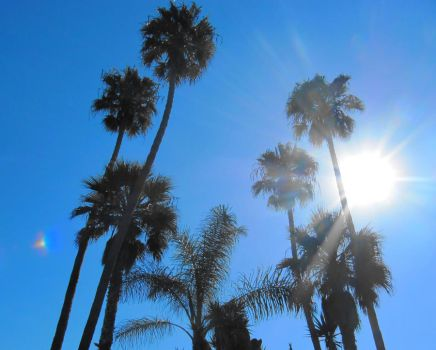 San Diego Palm Trees by soffl