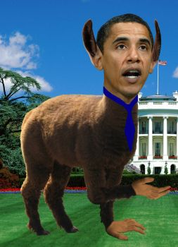 Obama Llama by wanted-dedore-alive