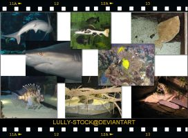 Aquatic stock images by LULLY-STOCK