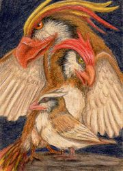 89 - ACEO / KAKAO - Pidgey  Line by malloth86