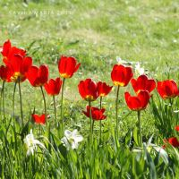 lovely flowers_111 by Marsulu