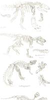 Dinosaur Studies by KelpGull