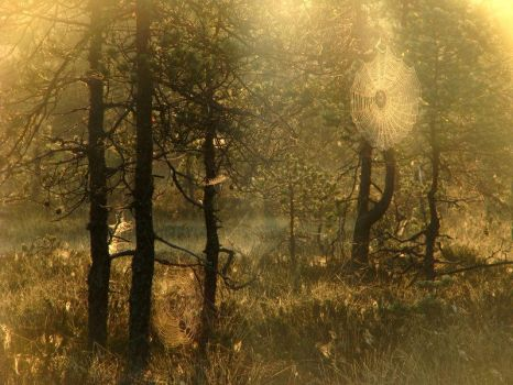 4.8.2009: Forest Visions by Suensyan