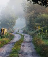 Morning Path by Caillean-Photography