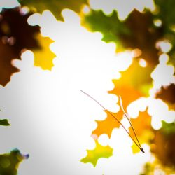 The fall by peregrin71