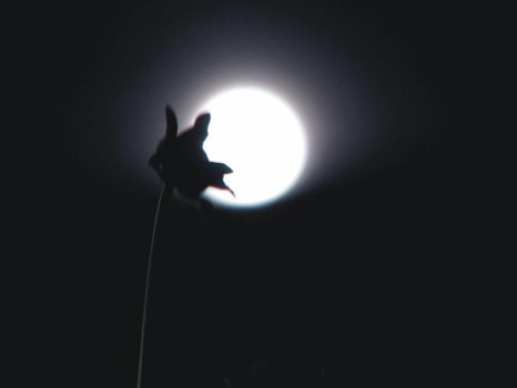 Moon Over My Garden by Indelibly-Yours