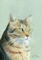 My cat Sarina (coloured pencils) by JenThams