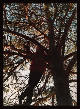 My Father in the Tree by diamondsTwinkle18