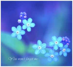 Forget-me-not by closer-to-heaven