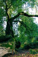 Trees in the green land - 2 by JuliArt